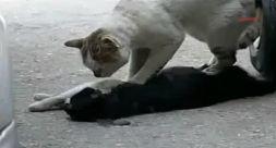 Лечение травм и переломов у животных