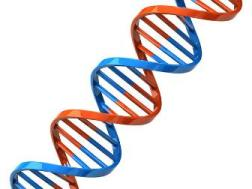 Диагностика генетических заболеваний