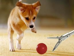 Эндоскопия для животных