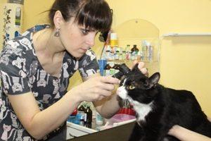 Что ветеринар проверяет на плановом осмотре