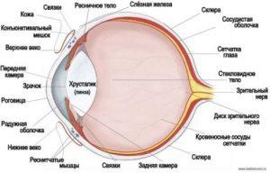 Заболевание глаз у кошек