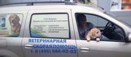 Мобильная профессиональная ветеринарная помощь