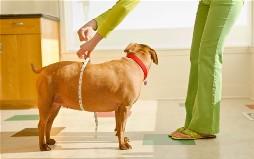 Ожирение у домашних животных