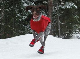 Собака зимой на улице