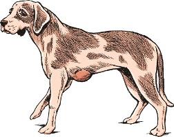 Липома у собаки