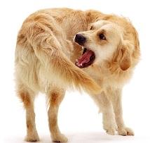 Почему собака виляет хвостом?