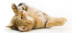 Слюнотечение у кошек