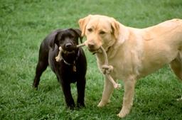 Все о здоровье зубов вашей собаки